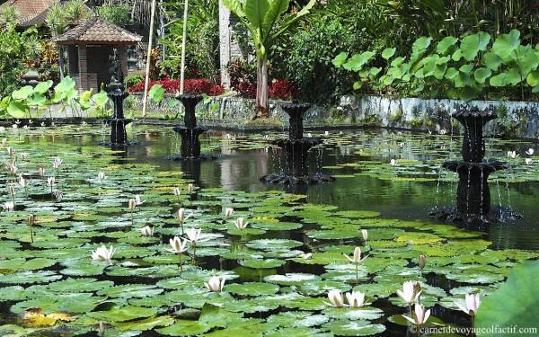 alimenter son jardin avec de l'eau de pluie