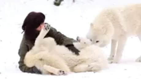 loups-jouent-avec-une-femme_152442_w460