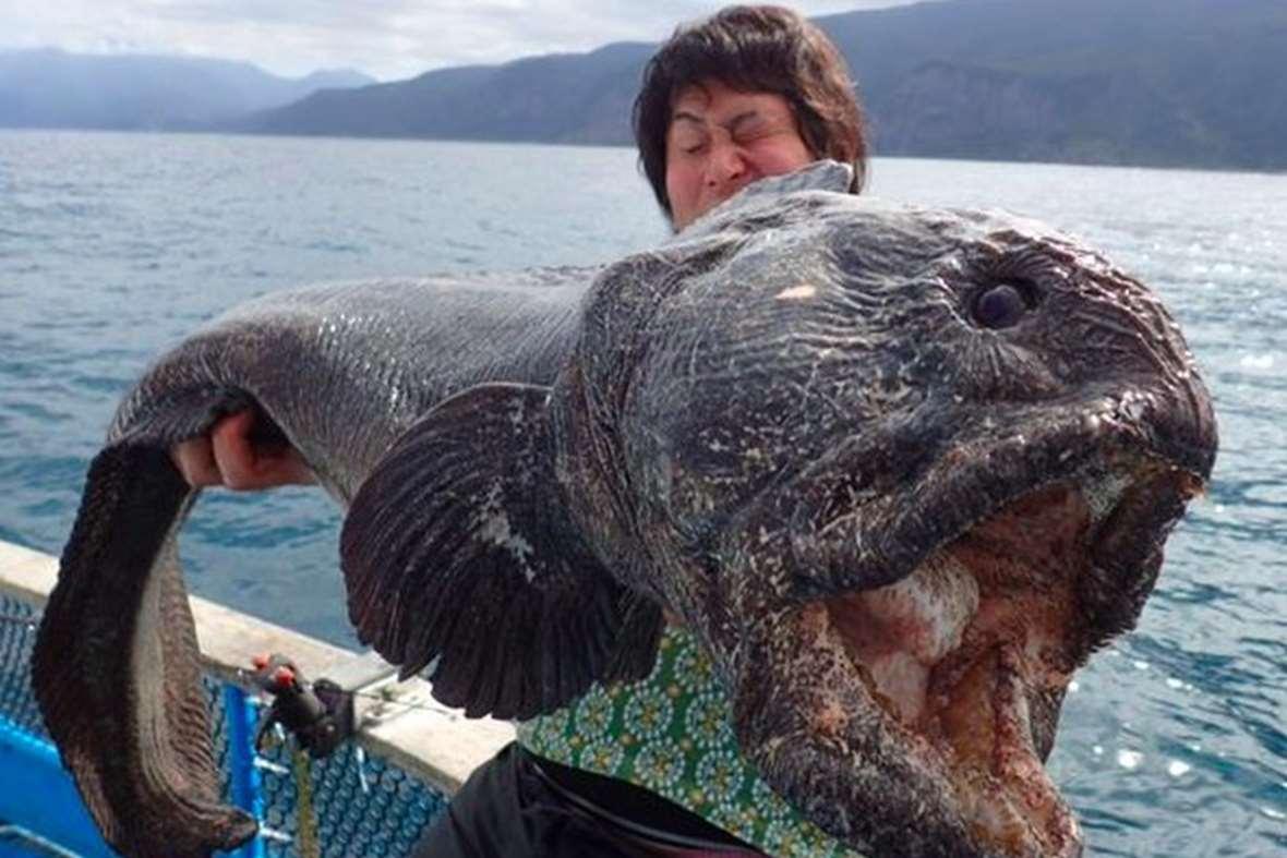 La pêche dhiver à Internet