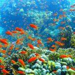 La Grande Barrière de Corail serait-elle menacée de disparition ?