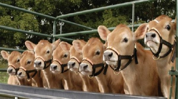 Recourir au clonage