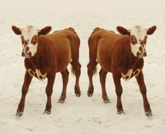 Le clonage