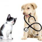 Pourquoi la vaccination des animaux domestiques est-elle importante ?