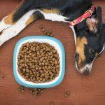 4 raisons de bien choisir les croquettes pour votre chien