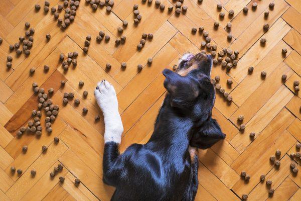 croquettes pour votre chien