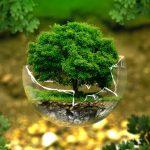 Pourquoi choisir des objets publicitaires écologiques ?