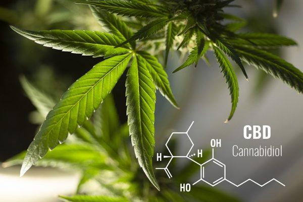 acheter cannabidiol CBD en ligne